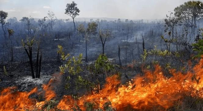 Bispos latino-americanos levantam a voz pela Amazônia