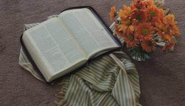 Reflexões da Palavra – 17º Domingo do Tempo Comum – Ano A